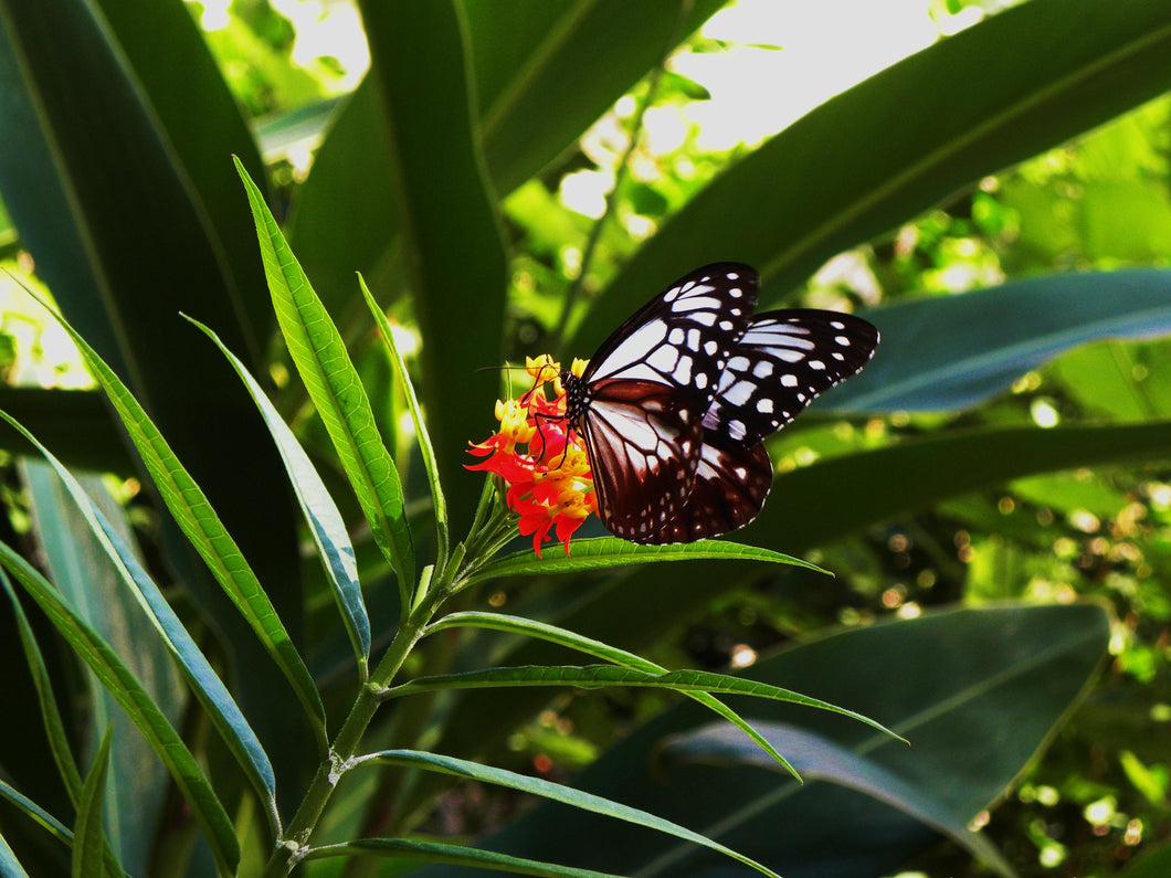 Butterfly in Hino City