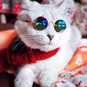Buy Instafamous Cat Sunglasses Novelty online, best prices, buy now online at www.GrabThisNow.co