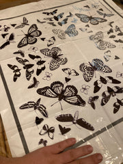 Plastic overlay to transfer cyanotype butterfly design