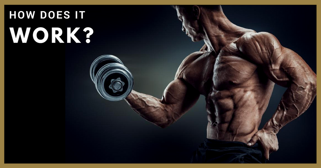 Everything You Need To Know About Epi Andro Golden Era Muscle