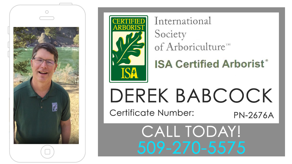Consultation with Certified Arborist Derek Babcock