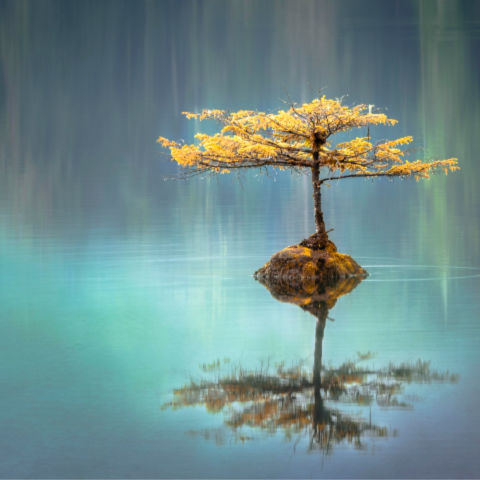 yellow zen tree in calm blue waters