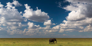 Wild Elephants - Art Wolfe
