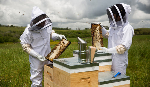 Manuka honey and bee welfare – what should you know before choosing a brand?