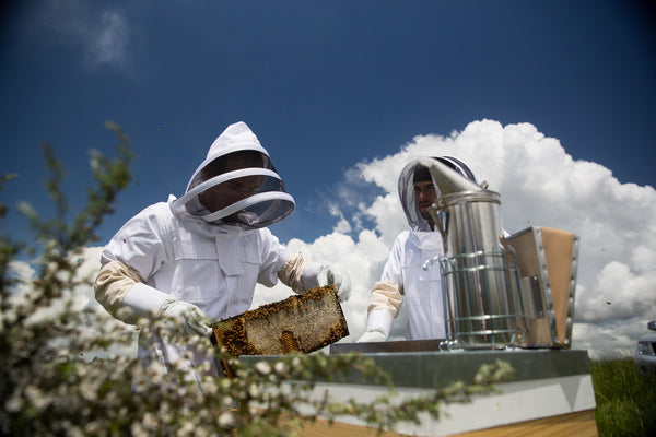 Manuka Bush and Beekeepers
