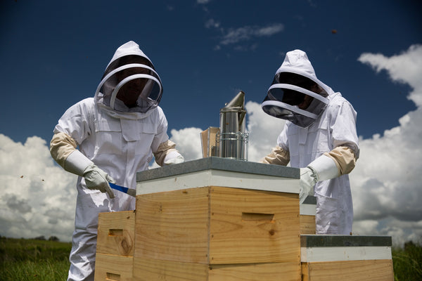 New Zealand Beekeeping