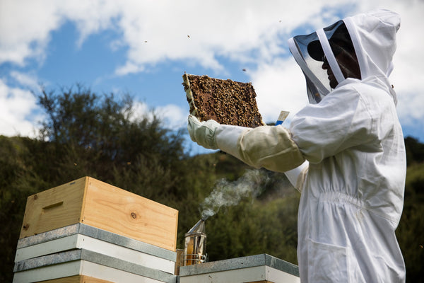 New Zealand Manuka Honey Beekeepers