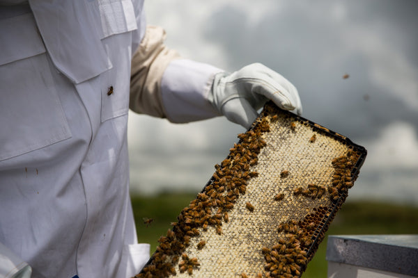 Manuka Honey Bee Hives