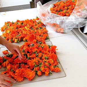 Premium Harvest Calendula Flowers: Local is Incredible!