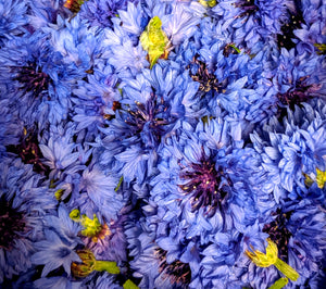 Blue Cornflowers are here!