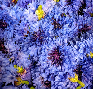Premium Harvest Herbs: Locally Grown Blue Cornflowers