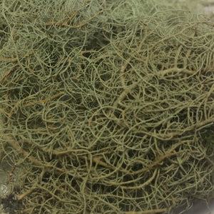 Usnea spp., Wild Harvested