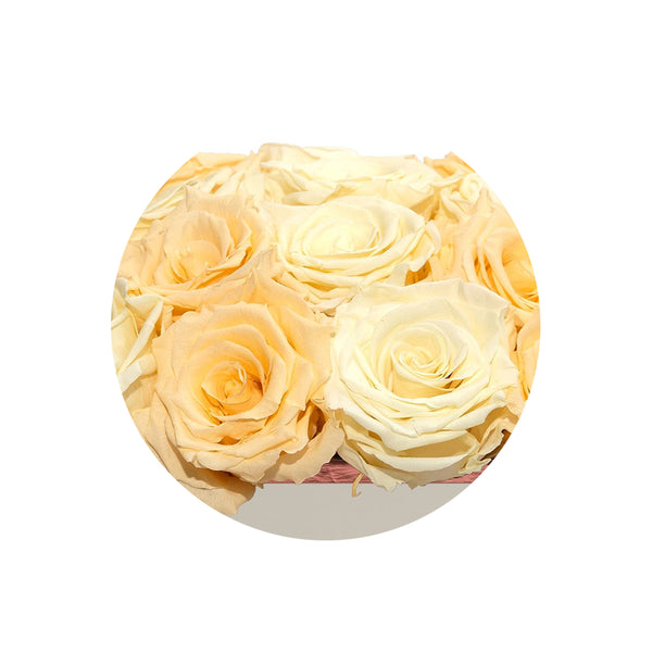 Square Ivory & Peach Luxury Preserved Roses