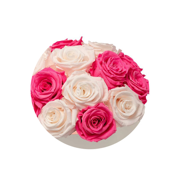 Fuschia and Ivory Luxury Preserved Roses