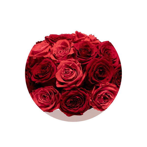 Red  & Red Impala Luxury Preserved Roses