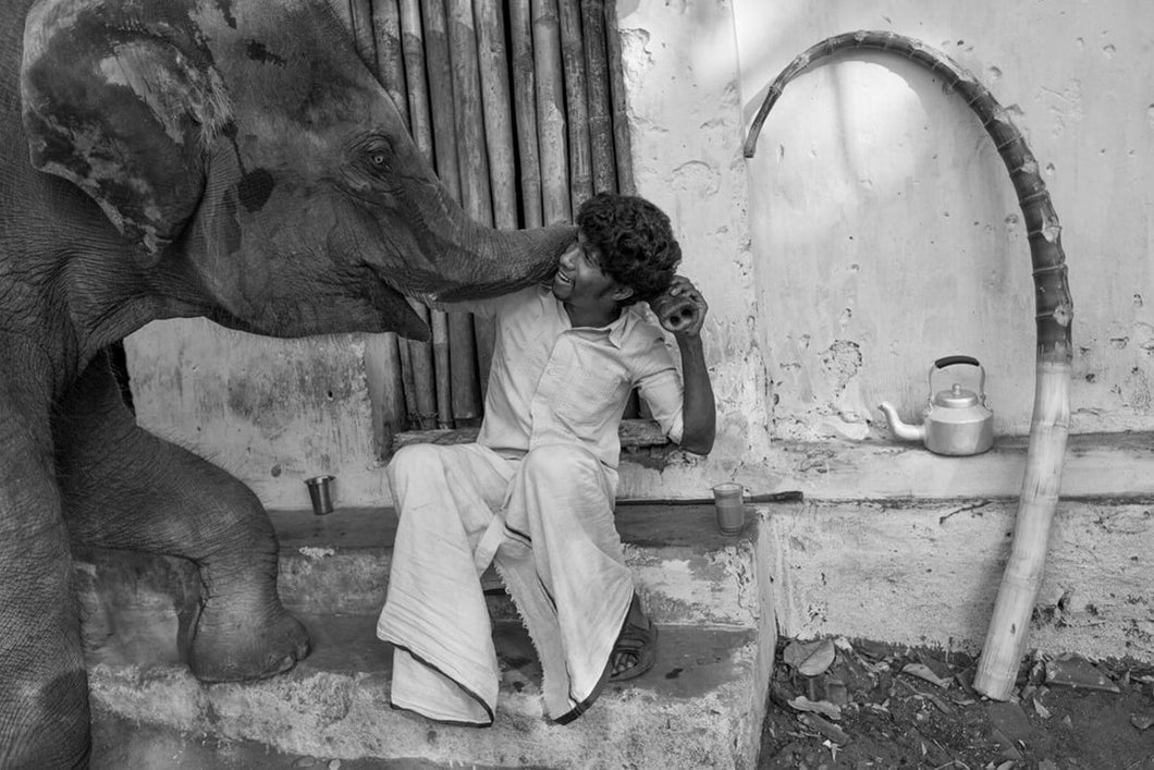 The bond between man and elephant is set at an early age |  South India.