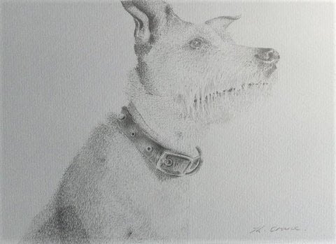 Pet Portraiture created with Graphite Pencil