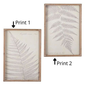Fern Shadowbox Framed Print (2 Styles)