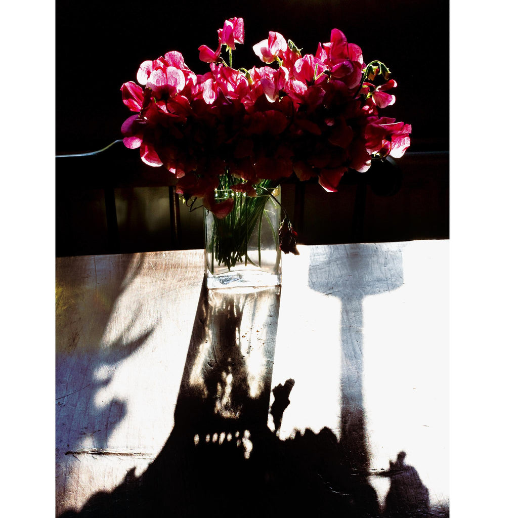Americana Sweet Peas in Dawn Sunlight