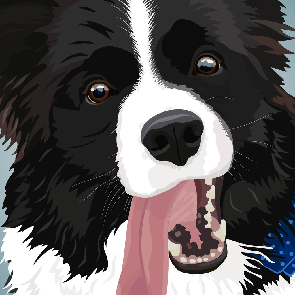 Border Collie Illustration