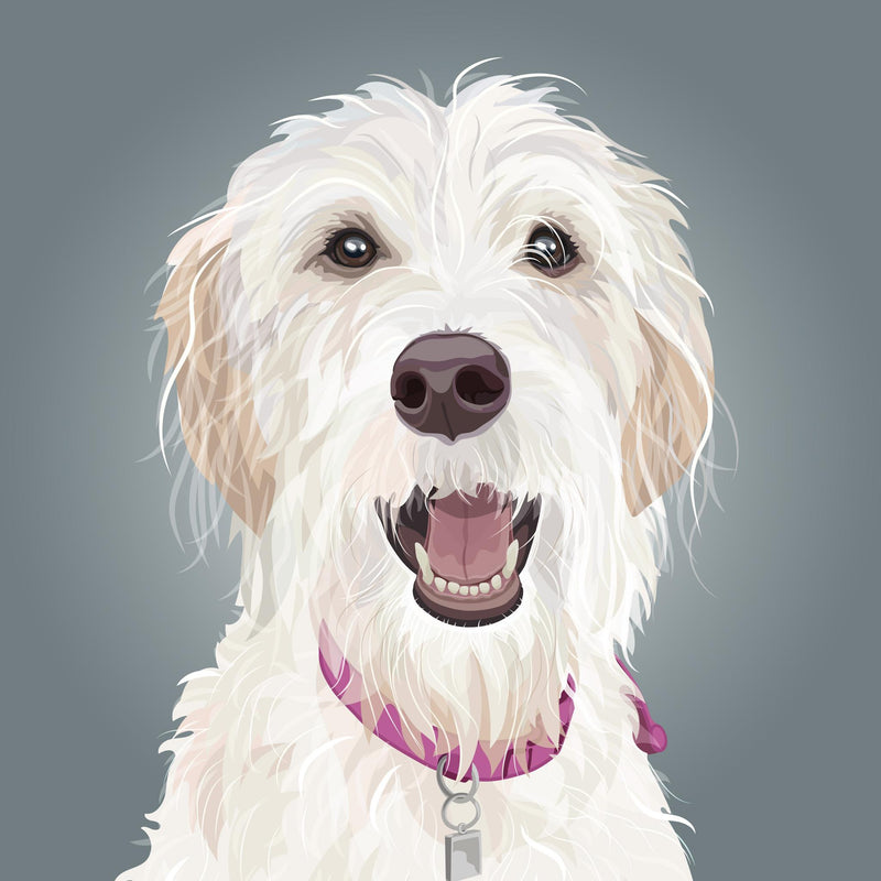 Labradoodle Illustration