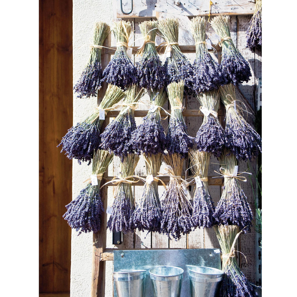 LAVENDAR on PROVENCAL DOOR - Greetings Card