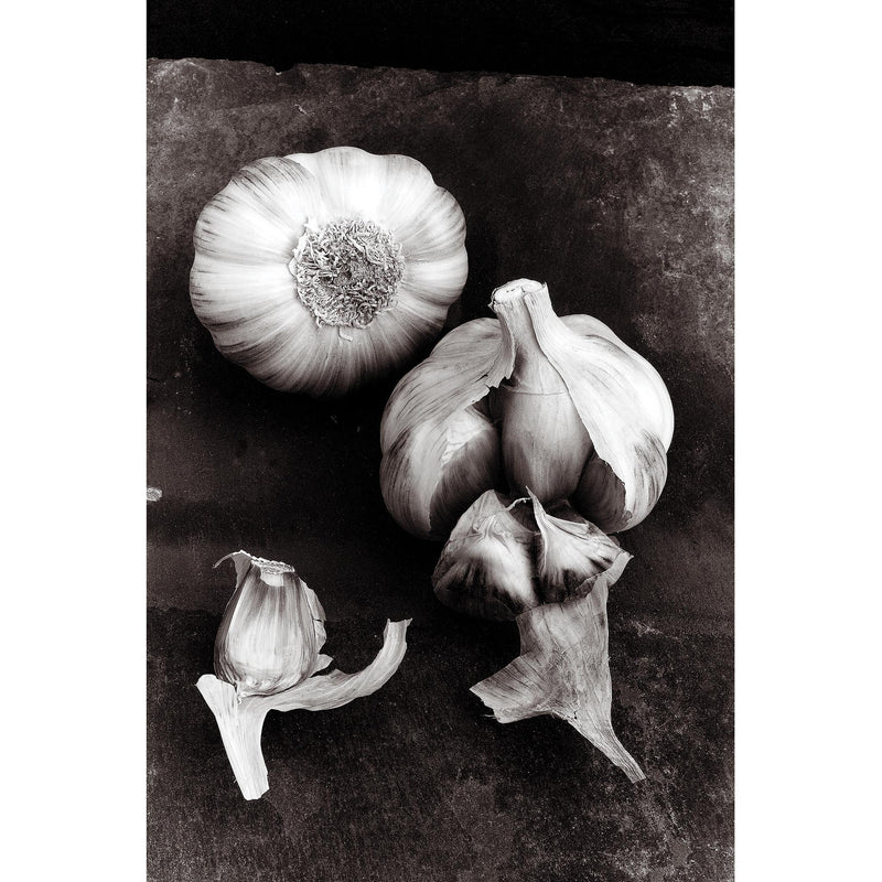 Gossamer skinned Garlic on Cumberland Slate - MONOCHROME