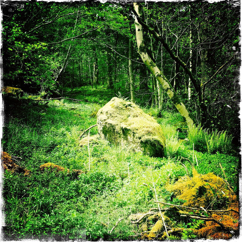 Ancient Cumbrian Woodland with Rock