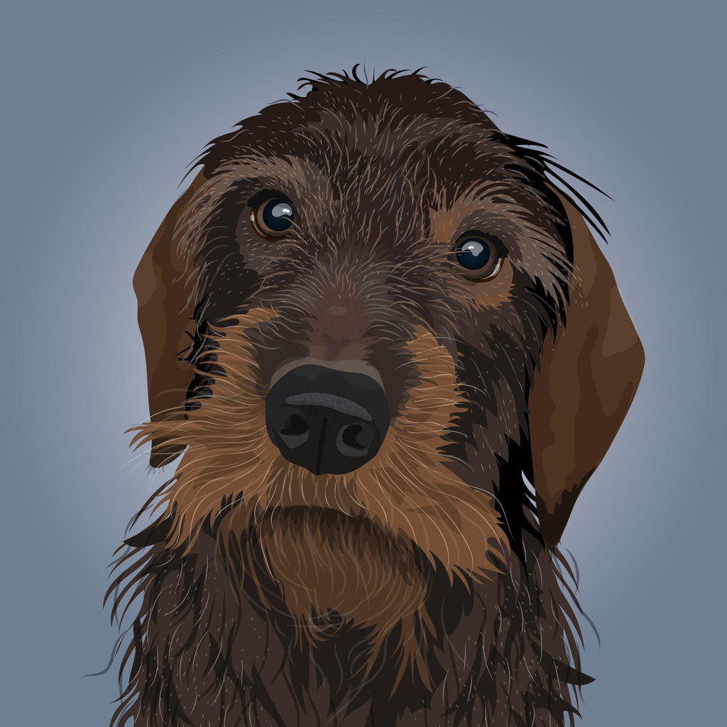 Wire Haired Dachshund Illustration