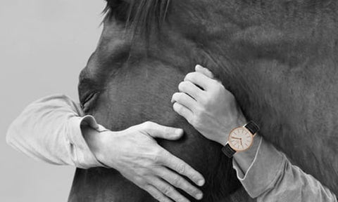 Watches Horses