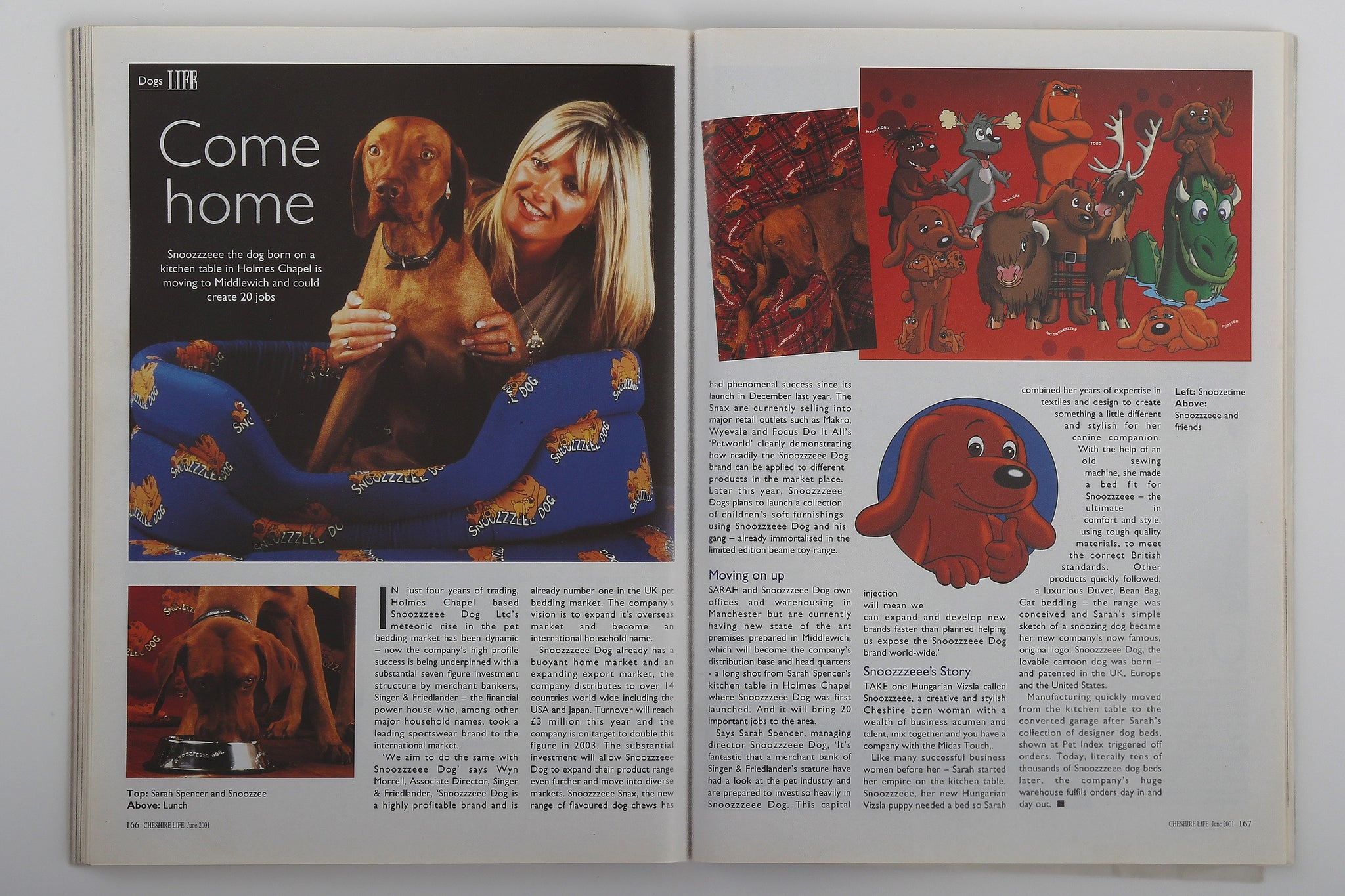 Dogs Life Article of Snoozeee dog