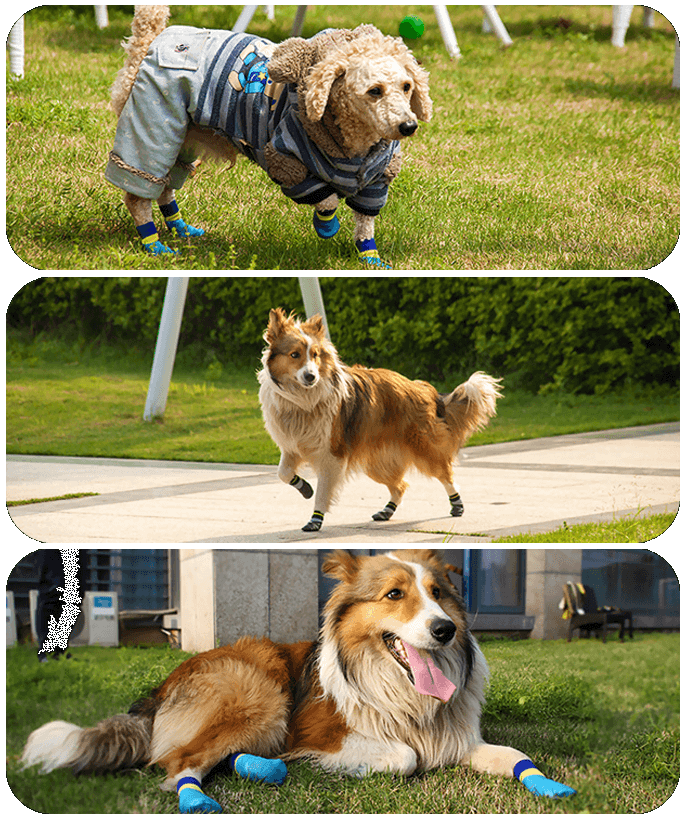 Pawsitive Doggie Boots
