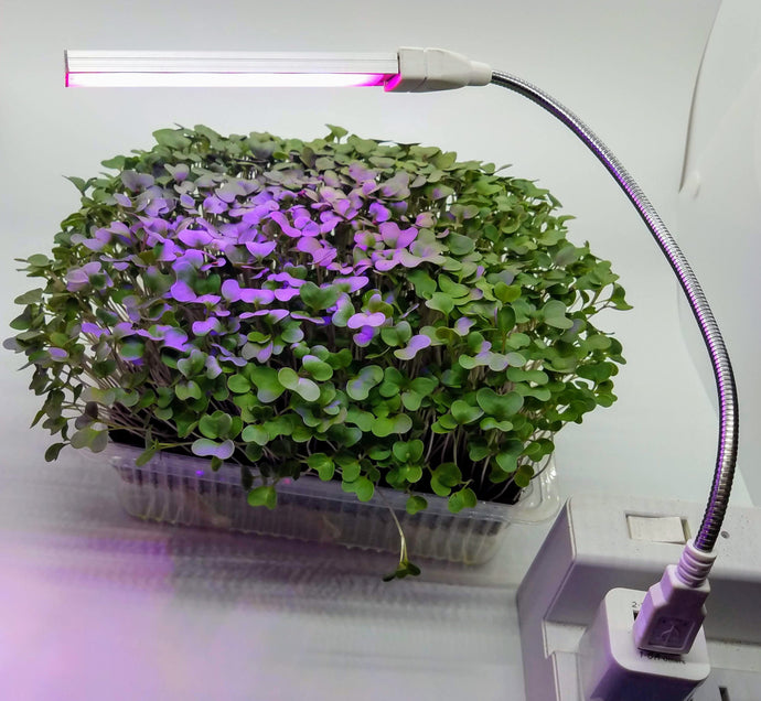 Auto Watering MicroFarm w LED Grow Light Microgreen Kit, You Cannot Get Better Nutrition, Fresher