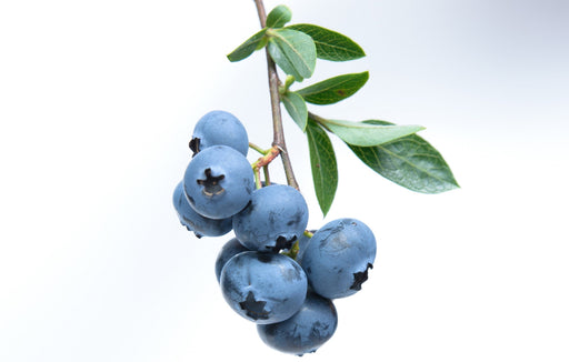 Blueberry Fruit Essence