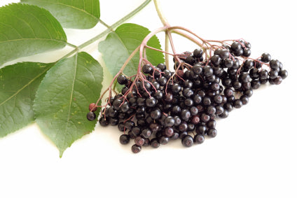 phytocide elderberry os