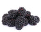 blackberry seed oil