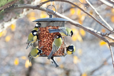 Technology in the garden - bird feeders