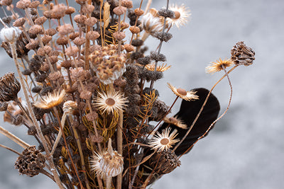Cut flower corner - dried seedheads and foliage