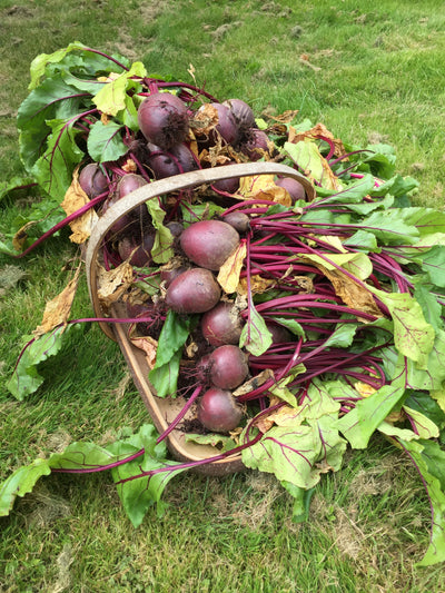 Great blogs for growing vegetables