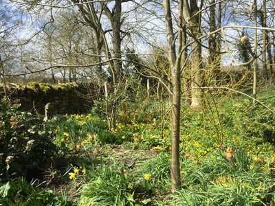Signs of Spring get gardeners going