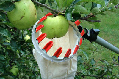 Technology in the garden - easy top fruit pickers