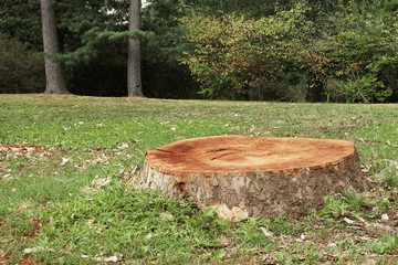 Delta Tree Service | FREE Stump Grinding