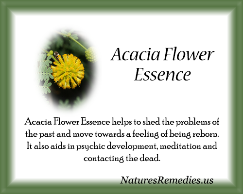 Acacia Flower Essence - Nature's Remedies