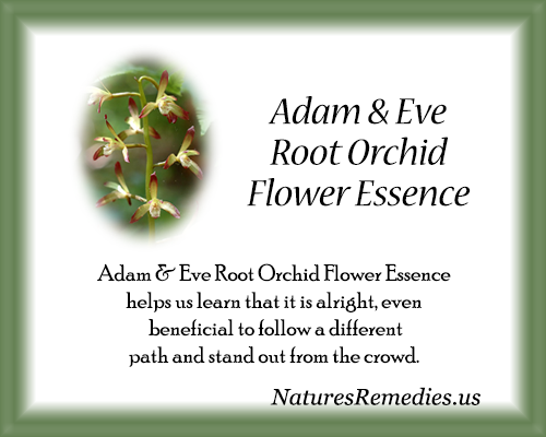 Adam & Eve Root Orchid Flower Essence - Nature's Remedies