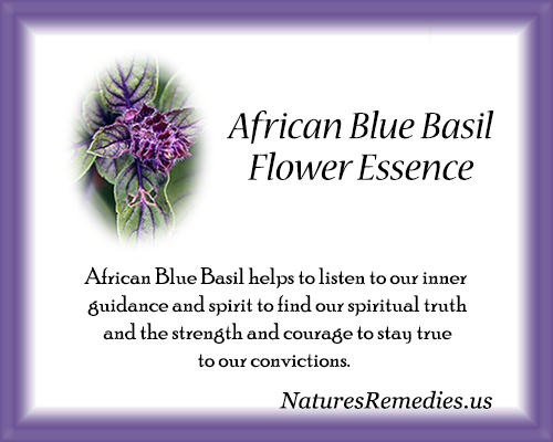 African Blue Basil Flower Essence - Nature's Remedies