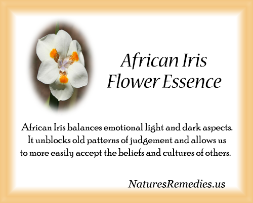 African Iris Flower Essence - Nature's Remedies