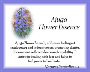 Ajuga Flower Essence - Nature's Remedies