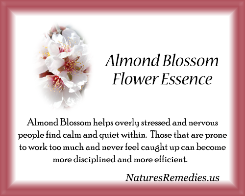 Almond Blossom Flower Essence - Nature's Remedies