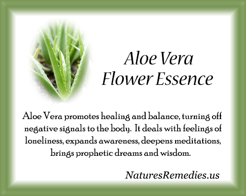 Aloe Vera Flower Essence - Nature's Remedies
