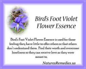 Bird's Foot Violet Flower Essence - Nature's Remedies